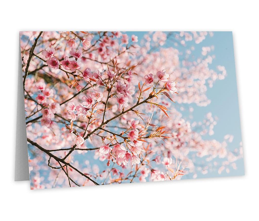 "Grußkarte für frühlingshafte Grüße mit dem Motiv ""Kirschblüte"""
