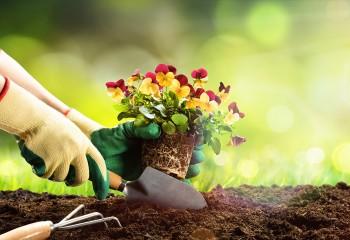 Pflanz eine Blume Tag